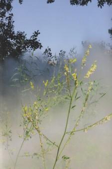 #3 Fog Sound Environment, Edwin van der Heide, 2013